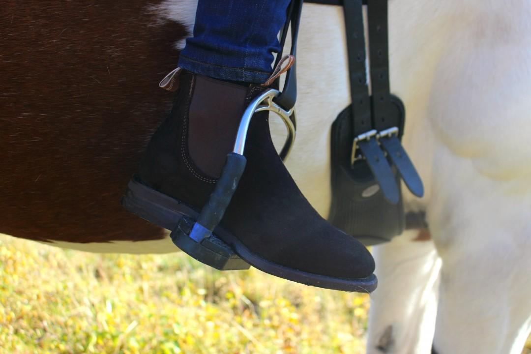 hest2IMG_3677